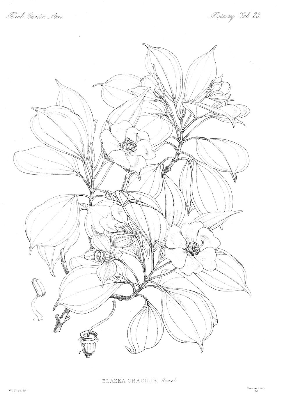 The botany coloring book by paul young - Botany Coloring Pages 19