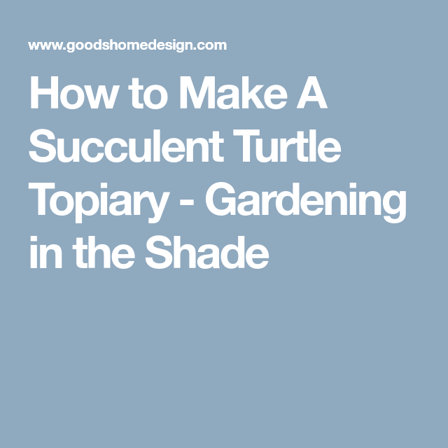 How To Make A Succulent Turtle Topiary Garden Topiary Succulents