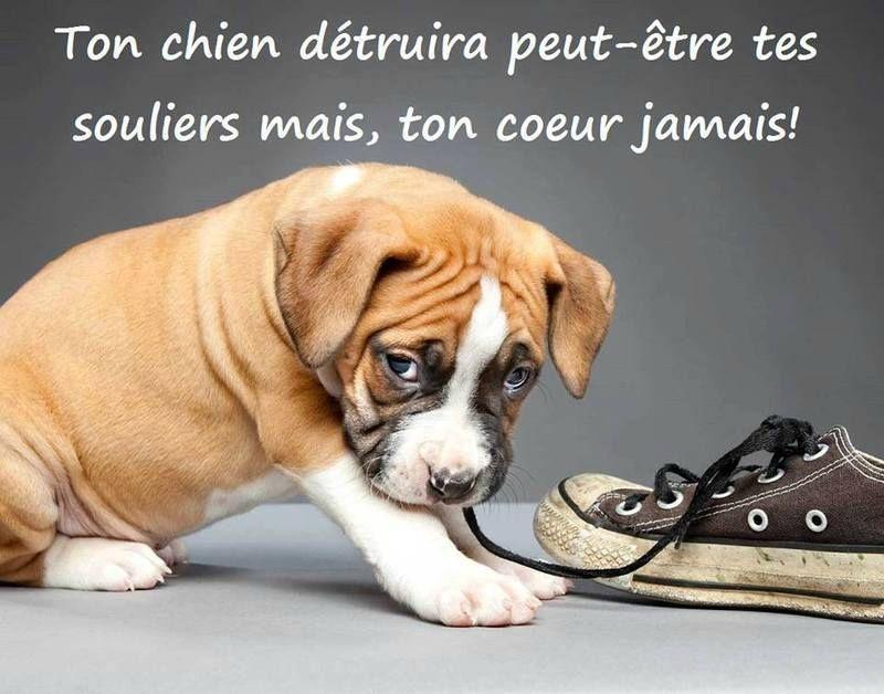 Citation Chien Citation Touchante Citation Animal Love