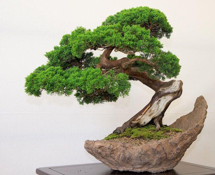 Juniper In A Natural Pot Bonsai And Other Indoor Plants
