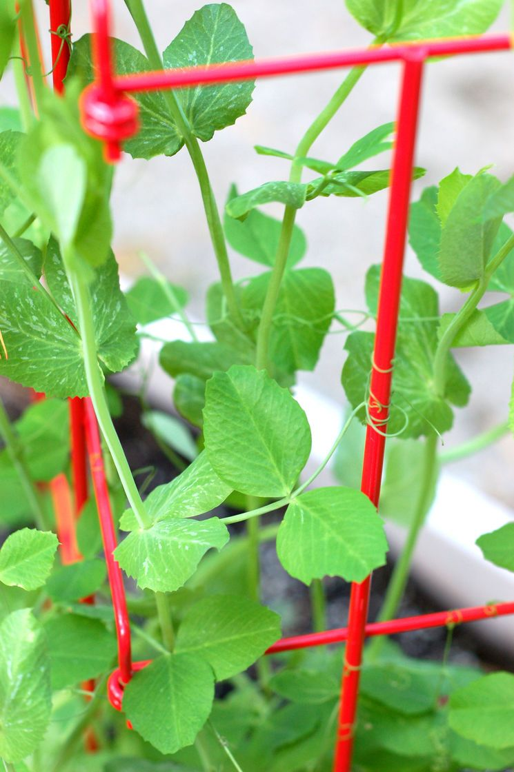 Gardeners Supply Company Expandable Pea Trellis