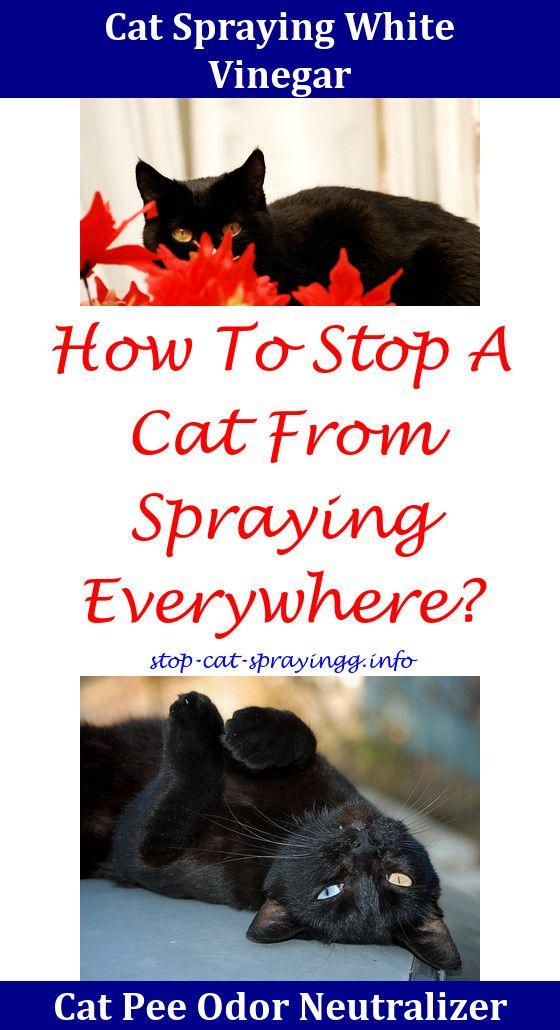 Cat Spray Hilarious Male Cat Spraying Cat Pee Cat Pee