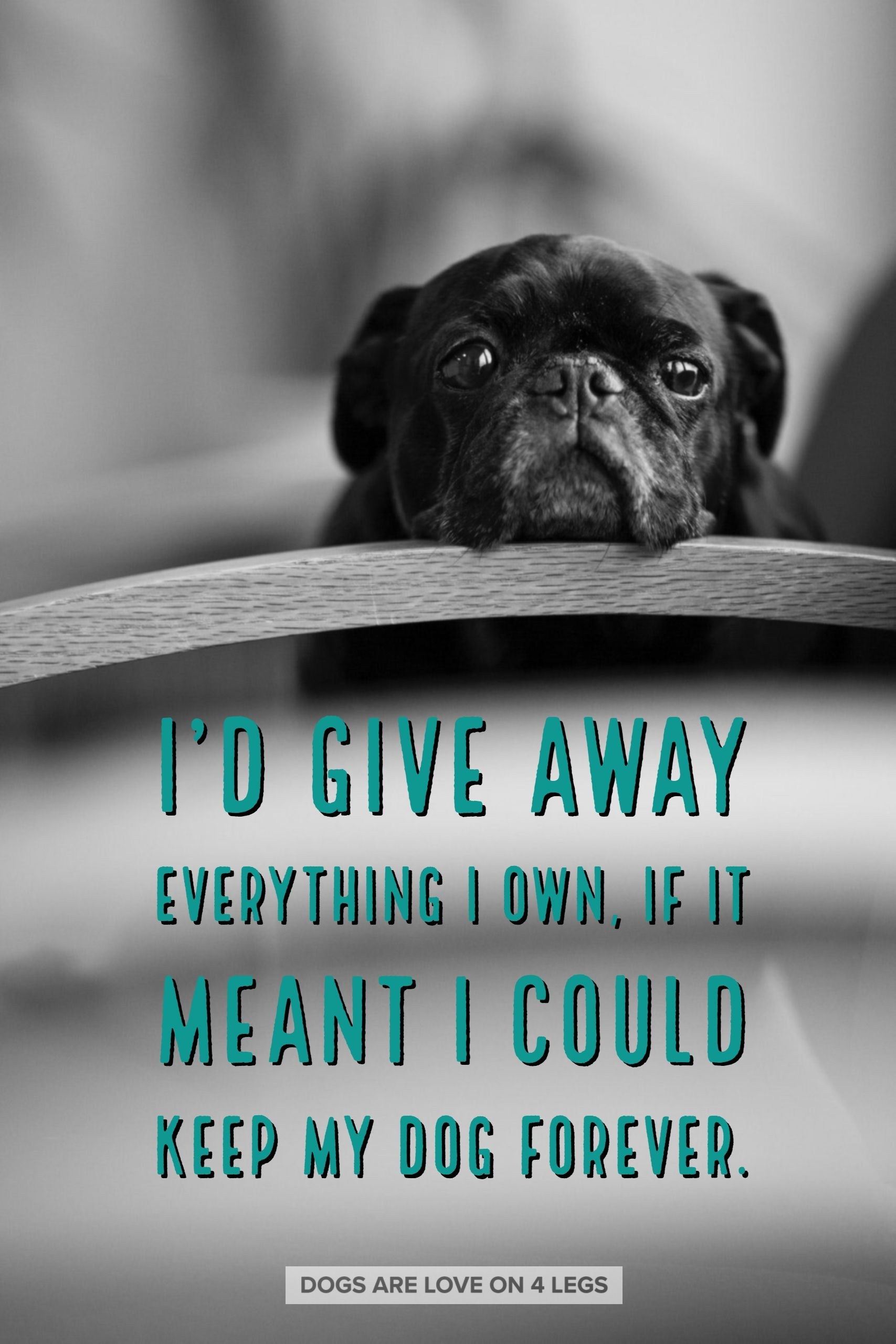 I D Give Away Everything I Own If It Meant I Could Keep My Dog