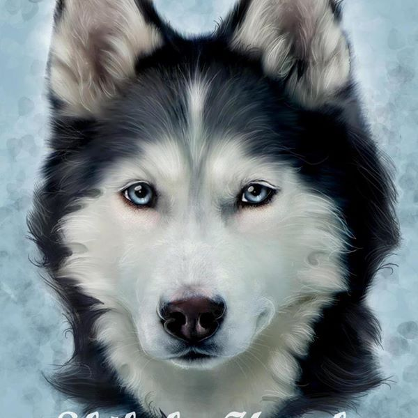 Stunning Siberian Husky Artwork Of Shiloh Via Gone To The Snow