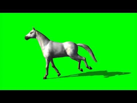 horse free green screen animation free green screen footage