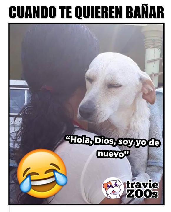 Me Quiero Quedar Cochino Memes Funny Cute Animals