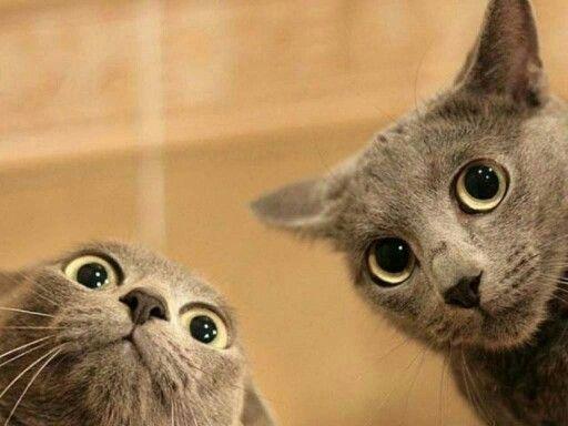 Resultado de imagen de gatos divertidos