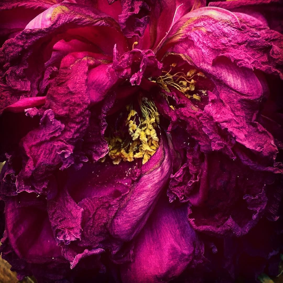 Treasure! #flower