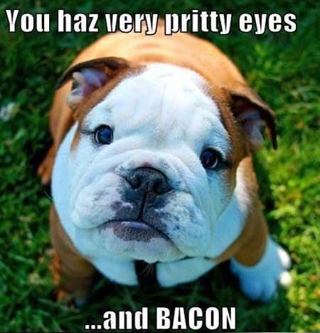Olde English Bulldogge Bulldog Cute Animals Funny Dog Pictures