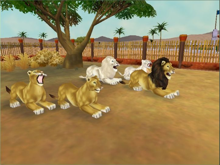 zoo tycoon 2 lion variants - Google Search | Zoo Tycoon 2