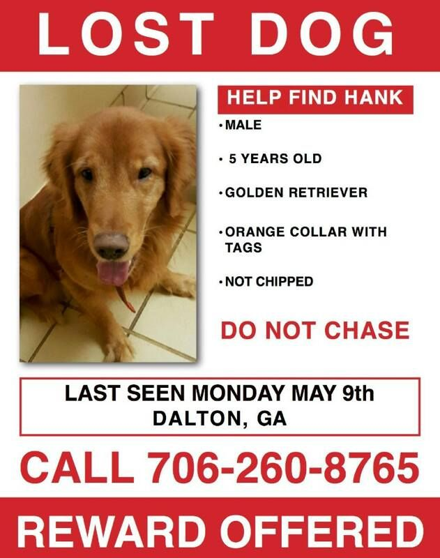 Hank Is Missing In Dalton Ga Lostbox Losing A Dog Dalton Dog Help