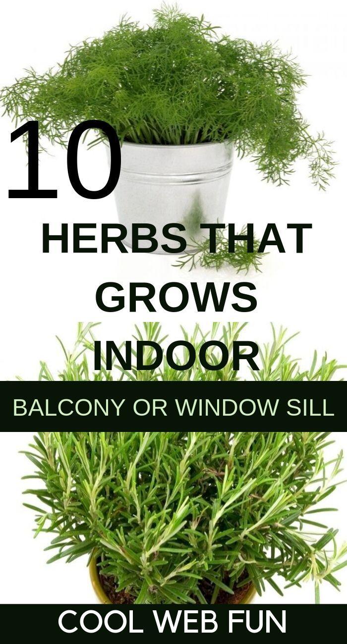 Photo of 10 Best Indoor Herb Garden to Grow Right Now