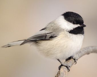 birds ~ black ~ white