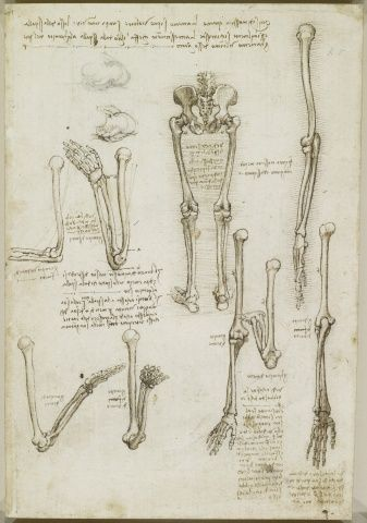 Leonardo da Vinci - The bones of the arm and leg. | Леонардо да ...