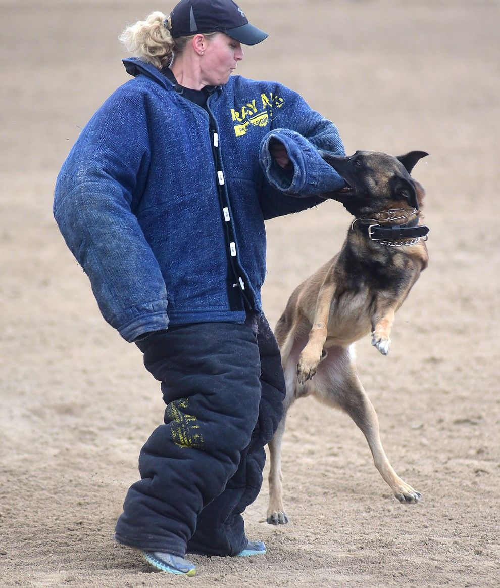 Phoenix Police Department S K9 Murphy Gets A Suspect During A