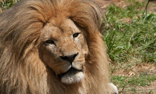 San Francisco Zio lions are so amazing