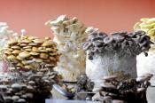 Grow your own mushrooms - Casa Foresta