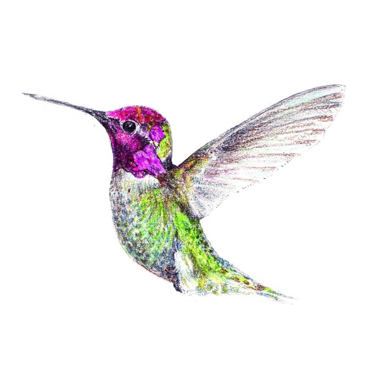 Simple Hummingbird Drawing | Watercolor hummingbird ...
