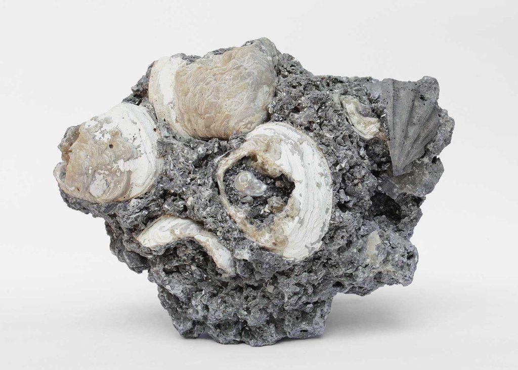 J156 | agate coral and shells | interi | Baroque pearls, Shells, Clams