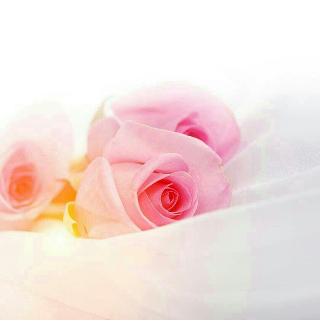 الاب رجل لن يتكرر في الحياة أبدا ولايسد غيابه أي أحد مهما كان فهو معطف الأمان في ليالي العمر المتقلبة صوته بالبيت يغني عن Ribbon Slides Projects To Try Rose