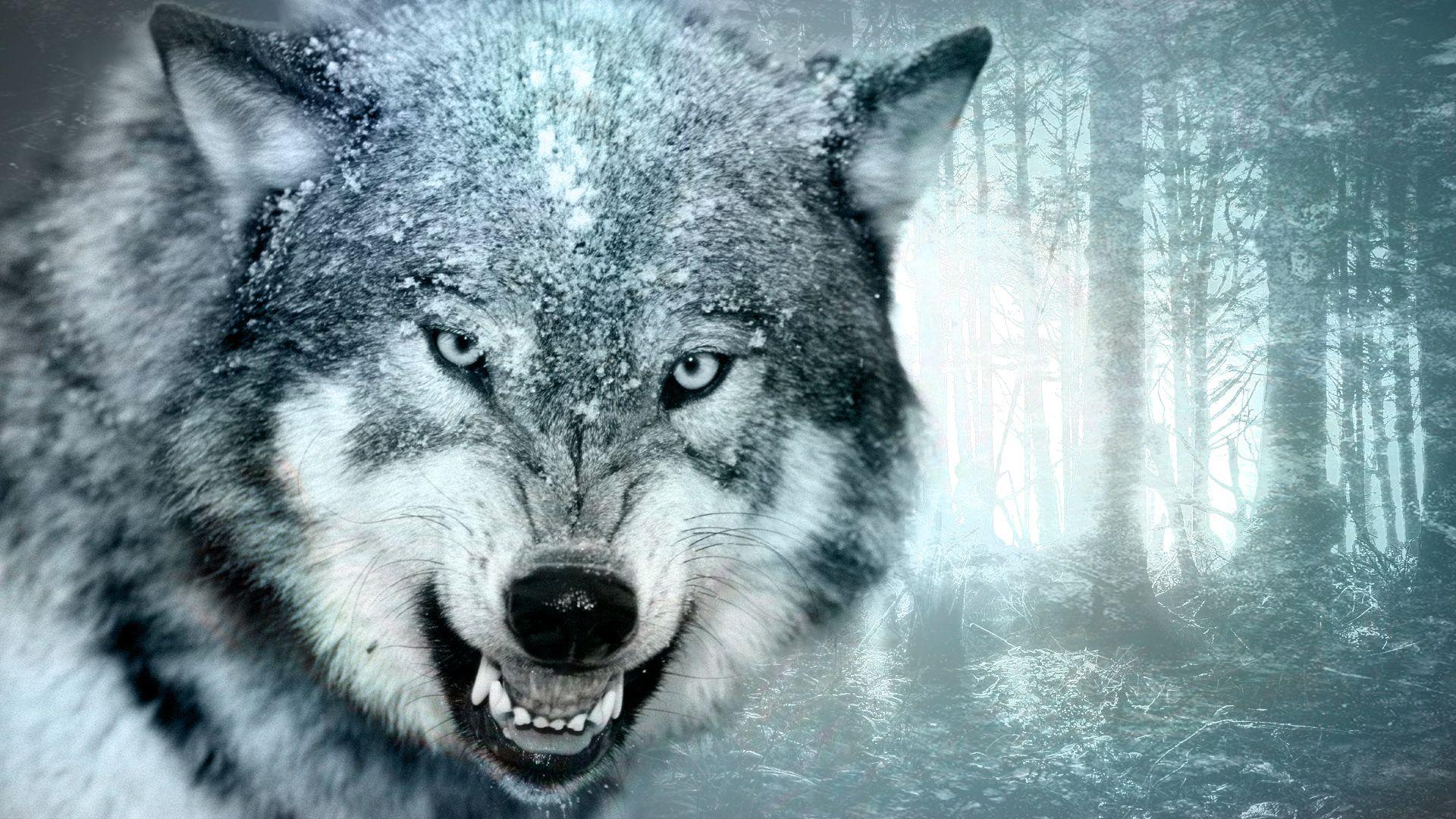Fonds D Ecran Animaux Loups Loups Des Neiges Photo Hibou Images Noir Et Blanc