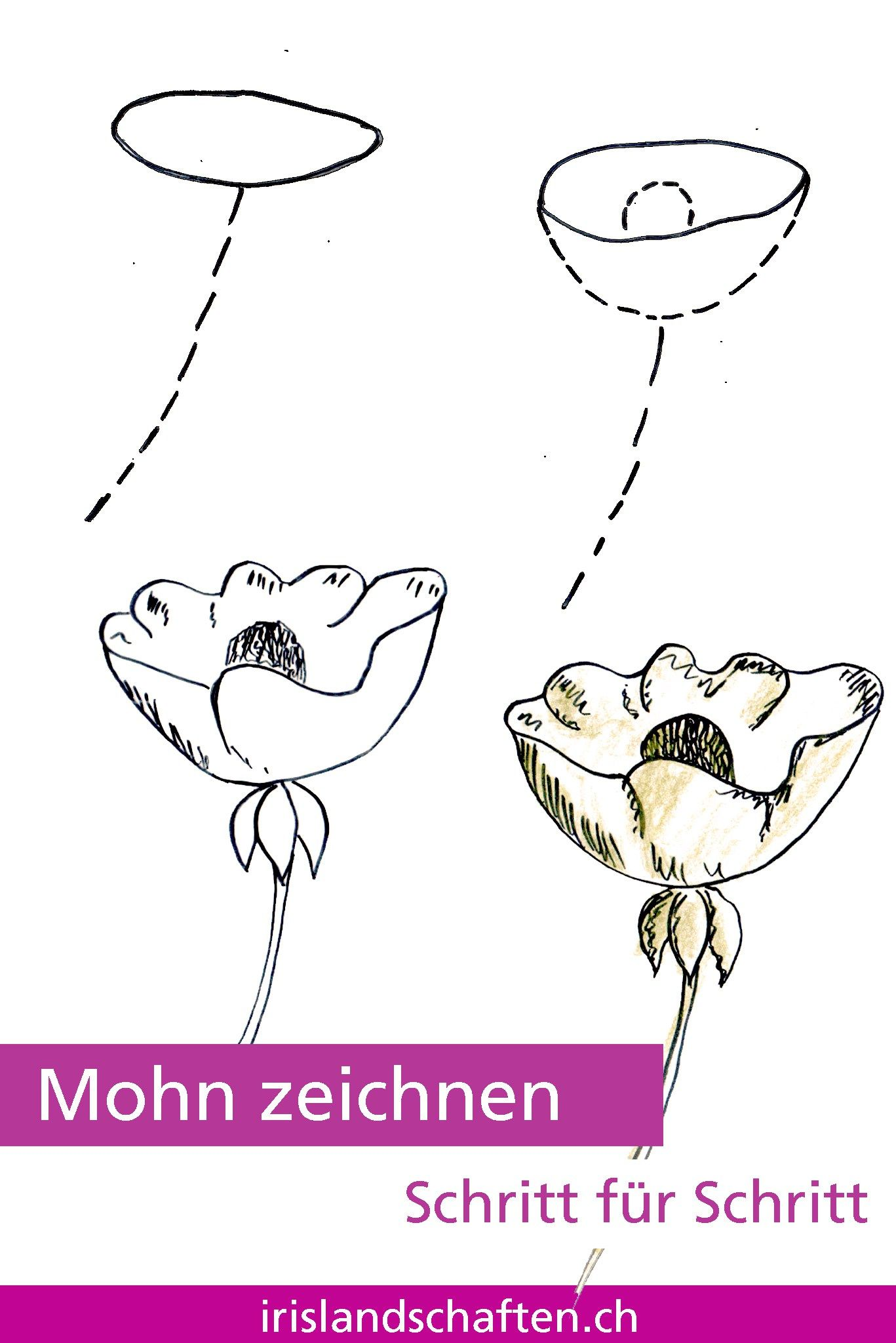 Pflanzen Zeichnen Schritt Fur Schritt 30 Tage Challenge In Der