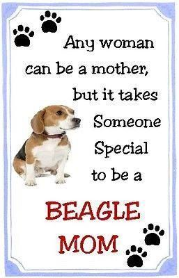 All Beagle Moms are special
