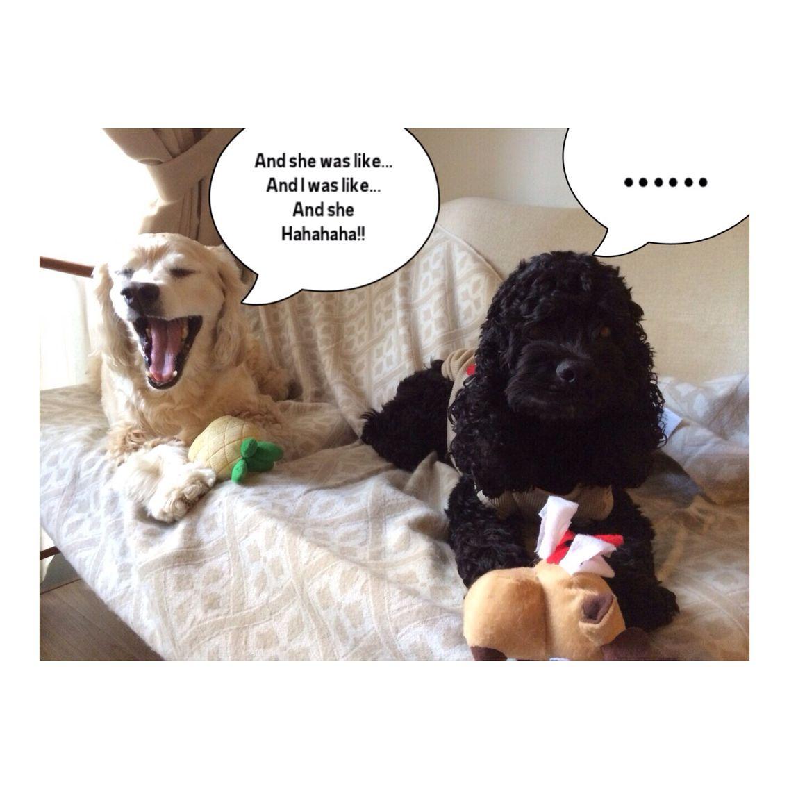 Dog convos  Thefurrytales.wordpress.com