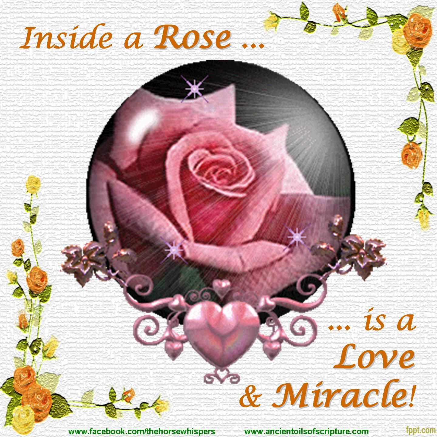 Inside a Rose is a Love & Miracle! 528 HZ is the note of