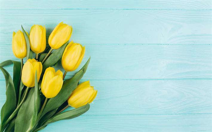 Fondo Primavera: Descargar Fondos De Pantalla Tulipanes Amarillos, Flores