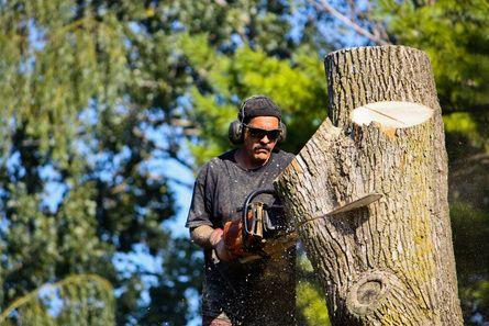 Tree prune service Phoenix AZ Low prices call  (623)7920017 click here