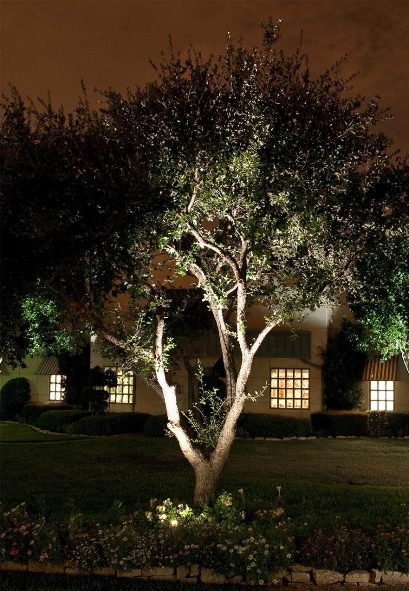 Uplighting a tree in a front garden can subtly direct ...