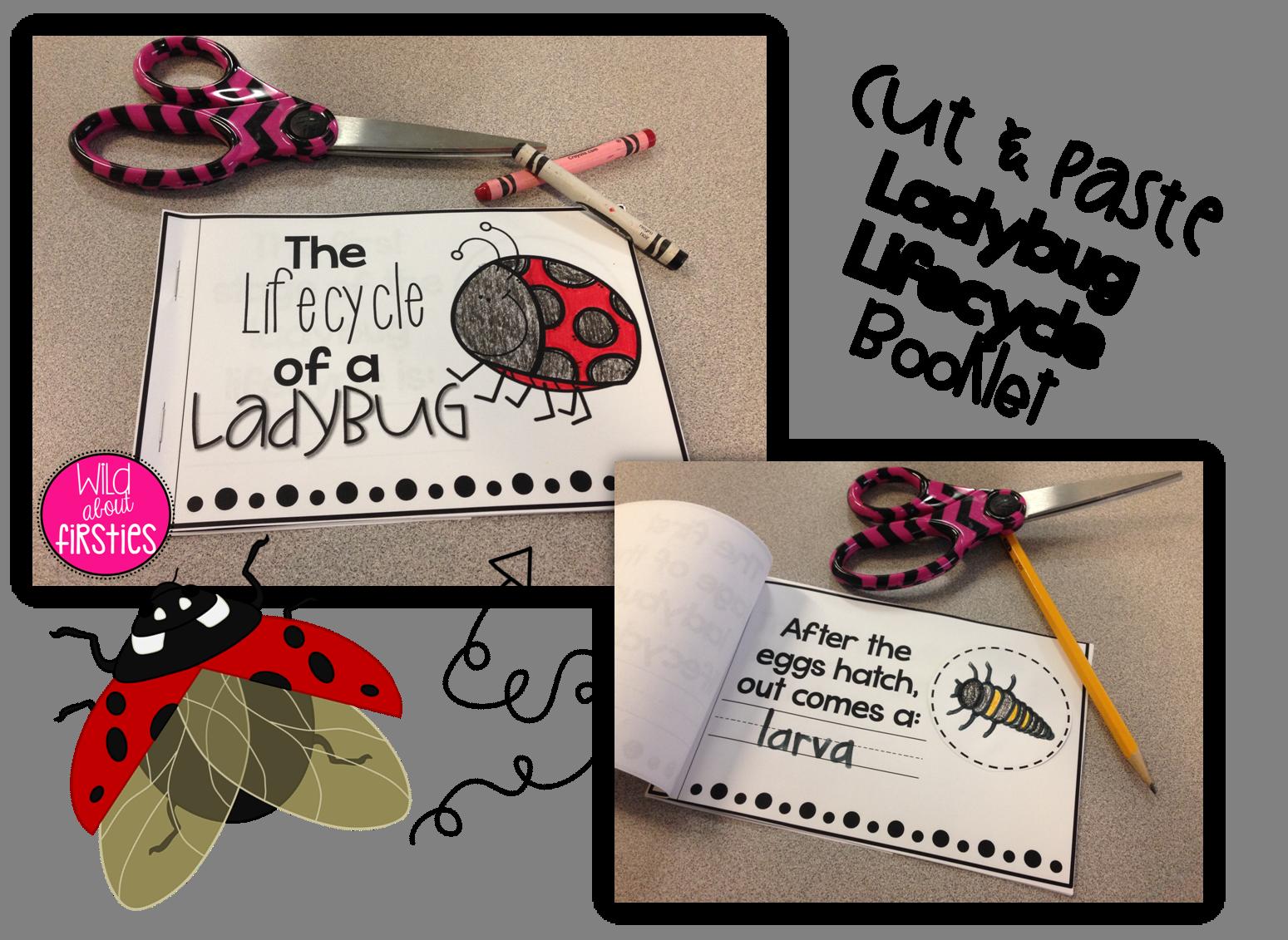 Ladybugs Amp Butterflies Life Cycle Freebies