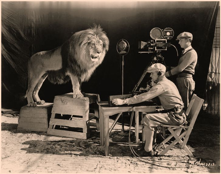 Jackie The Lion Recording The Mgm Roar 1928 Jackie The Lion Was