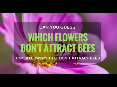 Top 10 Flowers That Don T Attract Bees