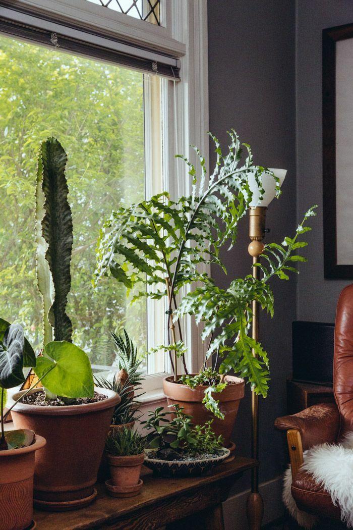Pin de Antoinette croteau en Plantes de maison Pinterest Plantas - decoracion de interiores con plantas