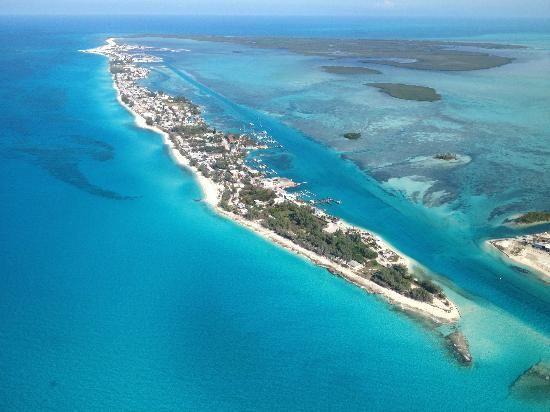 Bimini, Bahamas...Dolphin swimming!