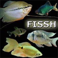 Photo of Must Read Aquarium Information Websites. aquariumopinions……