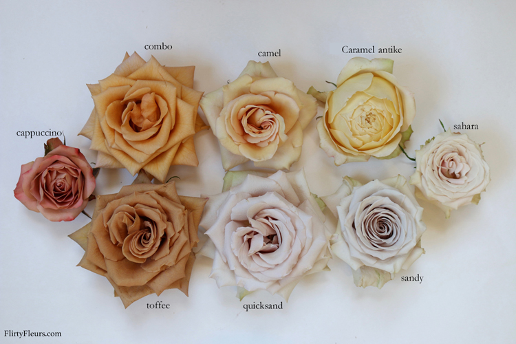 Brown Rose Color Study With Mayesh Wholesale Flirty Fleurs The Florist Blog Inspiration For Floral Designers Rose Flower Colors Rose Varieties Rose