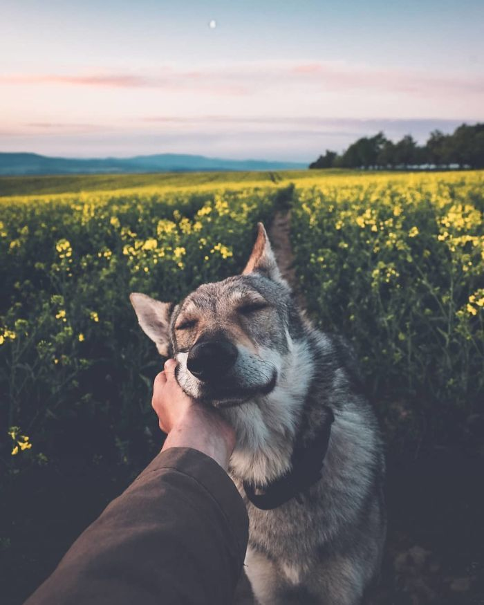 Tired Of #FollowMeTo Instagram Pics? This Guy Pets His Dog Everywhere He Goes, And Its 36 Times Better - #& ##FollowMeTo #and #Better #Dog #Everywhere... #Goes, #Guy #he #His #instagram #Its #of #Pets #pics #This #Times #Tired