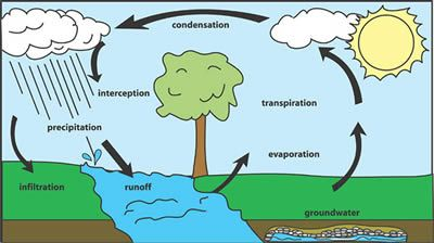 water cycle  cycle for kids and life cycles on pinterest