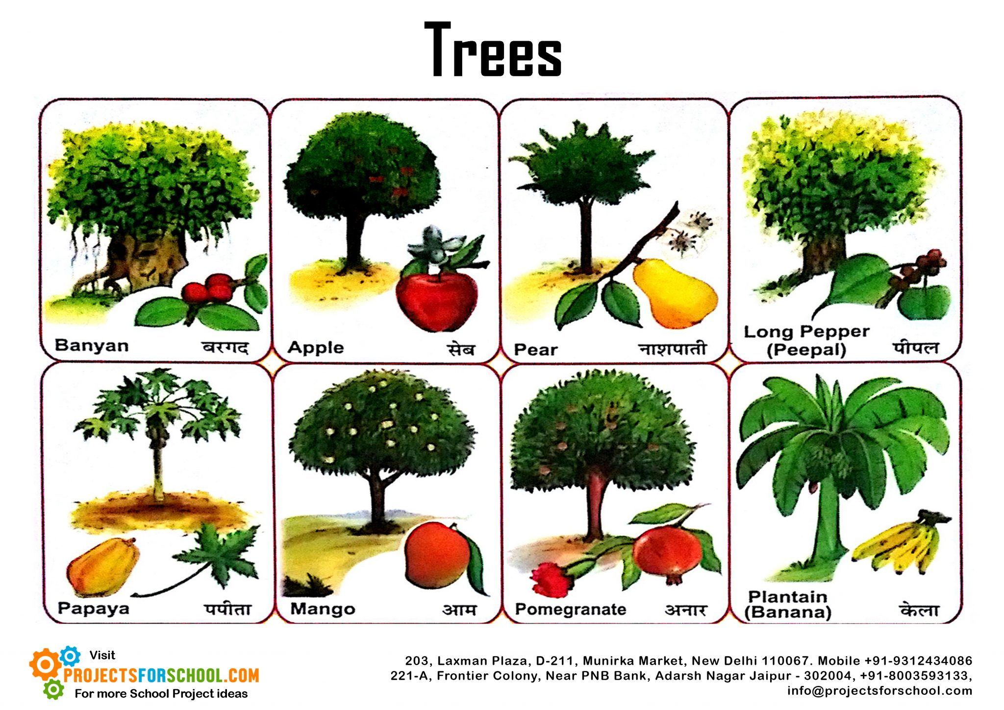Image result for different type of trees SCHOOL PROJECT