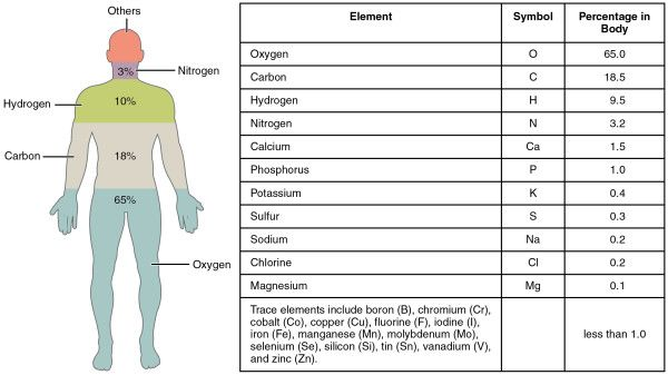 The elements in the human body. Image credit: Openstax college ...