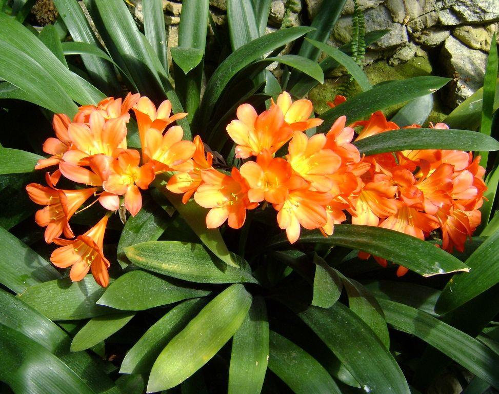 Znalezione Obrazy Dla Zapytania Kaktusy Kwitnace Zdjecia Plants