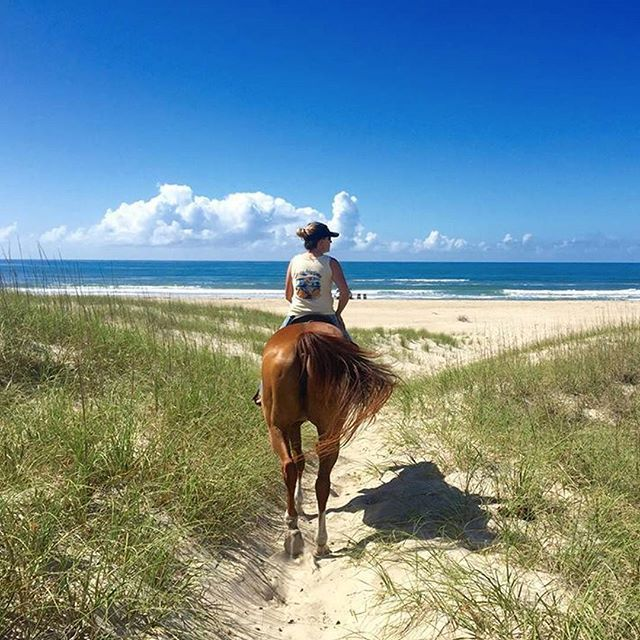 Image result for the outer banks horseback riding