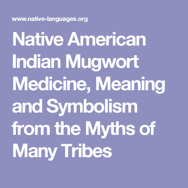 Native American Indian Mugwort Medicine Meaning And Symbolism From