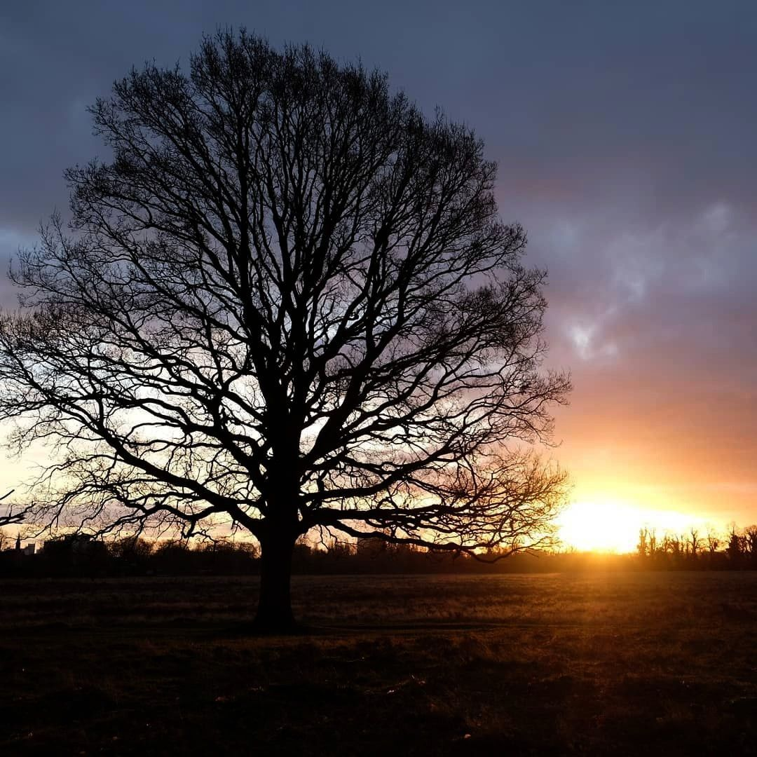 the shadows in  bushy Park..  Shooting the shadows in  bushy Park..    Bare Tree At Sunset by Dougl