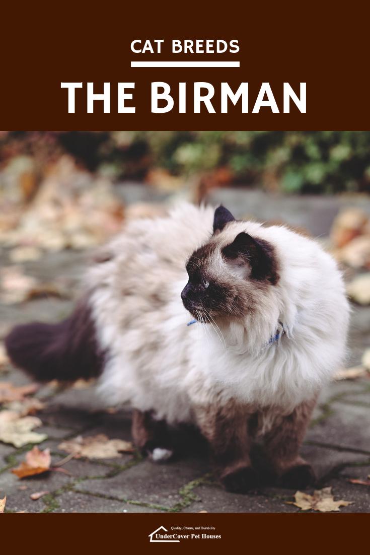 Cat Breeds The Birman Cats And Kittens Pinterest Cat Breeds