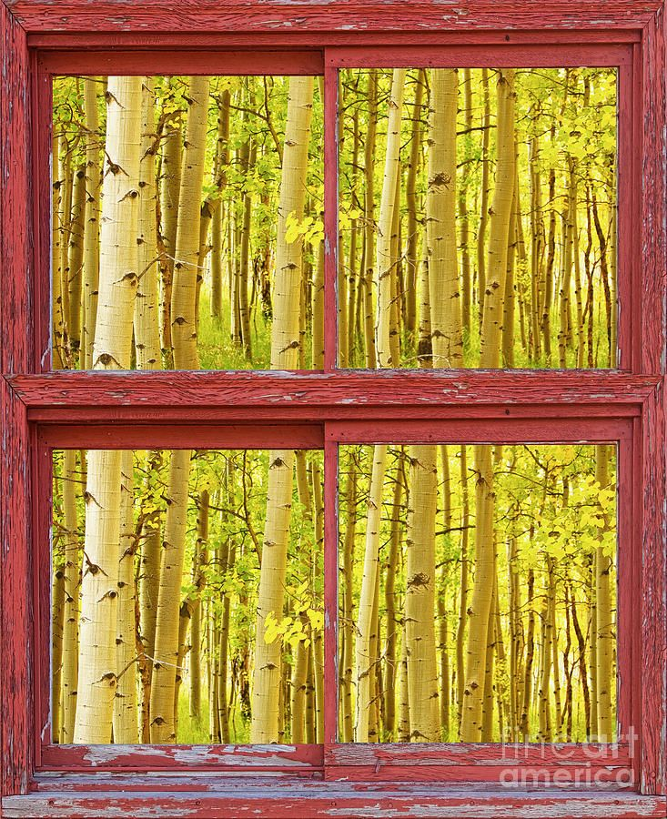 red ivy framed print autumn aspen trees red rustic picture window frame photos fine a