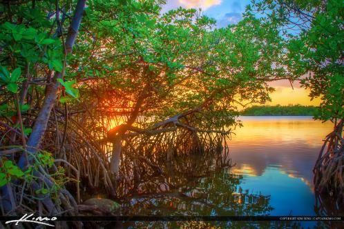 Mangrove Tree Sunset MacArthur Park Canoe Launch